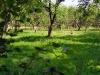 Поряд в саду пасеться бузько