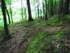 Зупинка «Ставки» по еколого-пізнавальній стежці «По Дубині», розробленій НПП «Гуцульщина». Ця територія —чудовий біогеоценоз, унікальне поєднання трав, кущів, дерев, звірів, риб і земноводних.