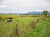 Посеред поля пес з будою — охороняє кукурудзу