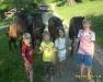 Коні — найкращий відпочинок для дітей