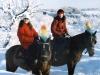 На конях взимку