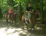 Кінна прогулянка лісом Верхи на конях Карпатами