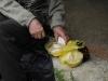 Пан Петро пригощає домашнім сальцем з циболькоу