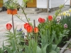 Приватна садиба «Біля Черемошу», На подвір'ї