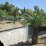 Канські вілли стидливо ховаються за пальмами