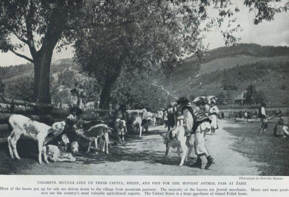 Кольорово-вбрані гуцули виводять корів, овець та свиней на торги в понеділок у Жа'бє