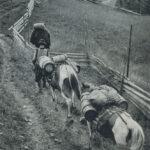 Польський караван перевозить діжки з сиром з овечого молока