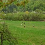 Футбол у Шешорах